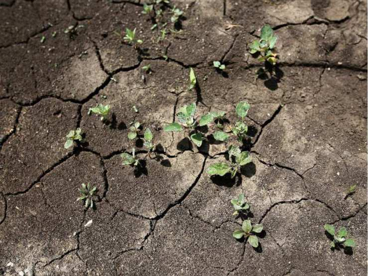 Sprouting on Dry Ground